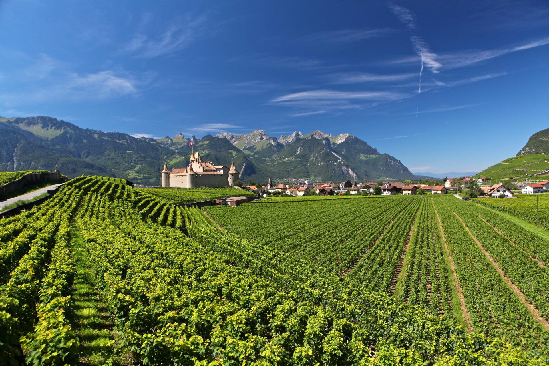 chateau et quartier du cloitre au milieu du vignoble